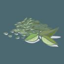 Blancrème - Gommage corps - Thé vert 2