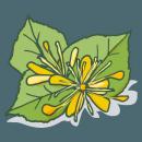 Blancrème - Crème corps - Soufflée Tilleul & thé vert 2